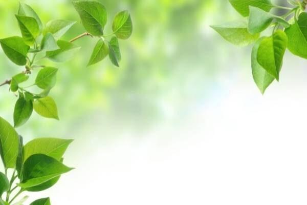greenery and heart health